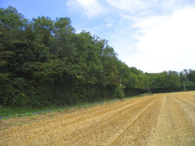 Park Wood, Doddinghurst, Essex