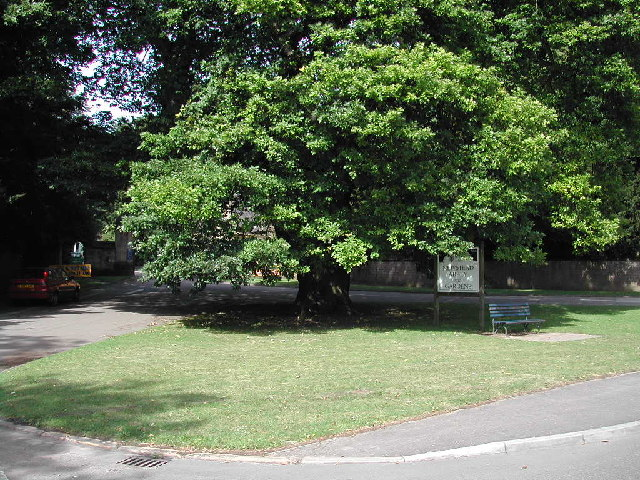 Pilgrim Oak and entrance to Newstead Abbey, Ravenshead