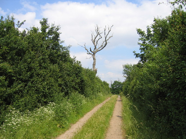 Green Lane near Dunchurch
