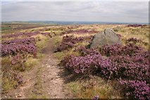 SE0020 : Calderdale Way footpath, Great Manshead Hill by Mark Anderson