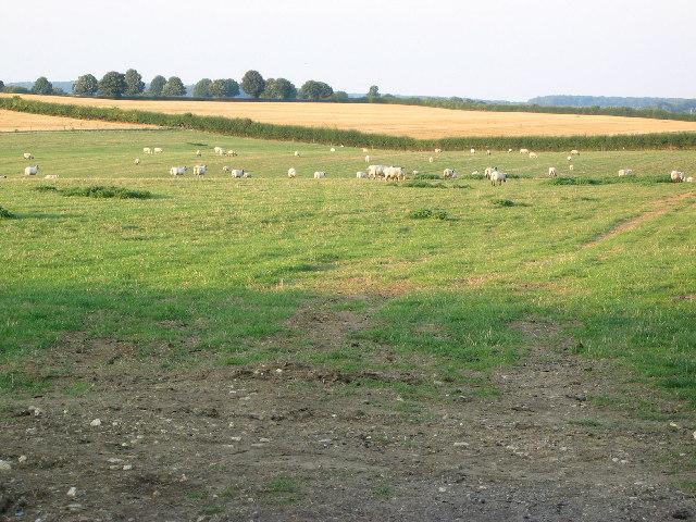 Fields, Crossway Farm, Stainby