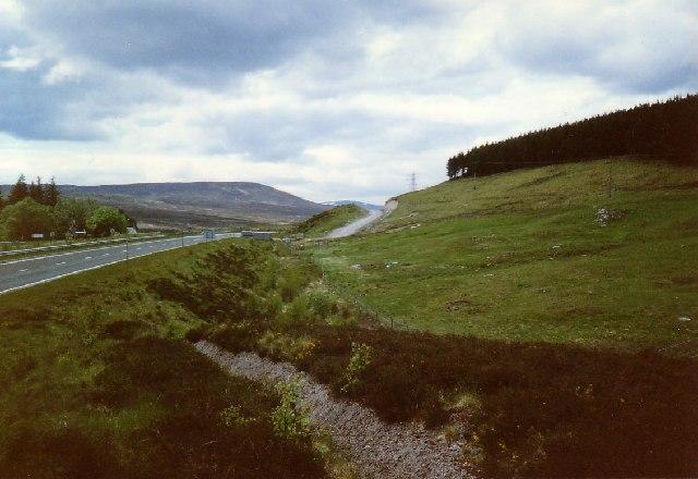 Dalnacardoch Wood near the A9