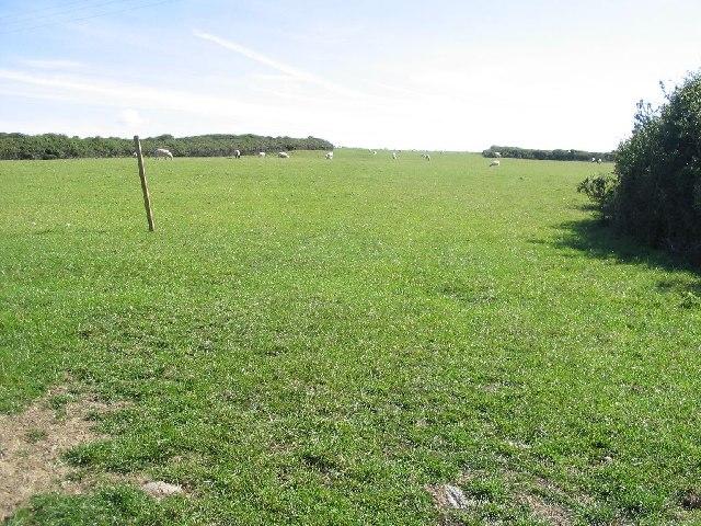 Pasture at Church Bay