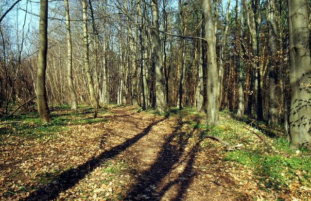 Woodland nr. Beauvale Priory