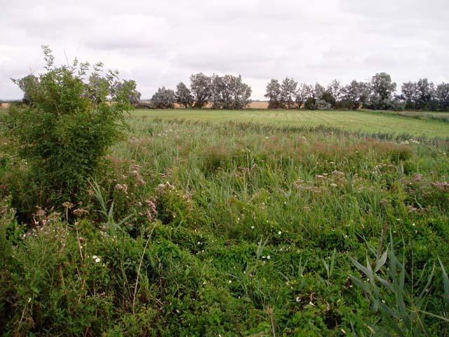 Teversham Fen landscape