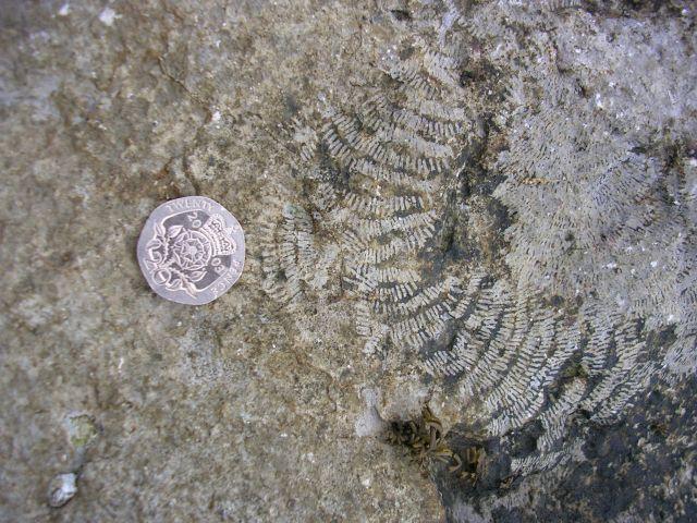Fossils near Morcyn