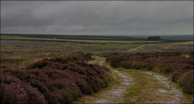 Field Barn on Hamer Moor