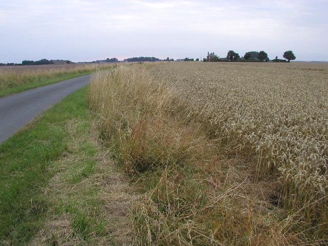 Holderness flatlands