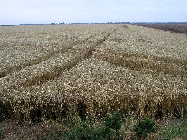 Holderness flat agricultural land