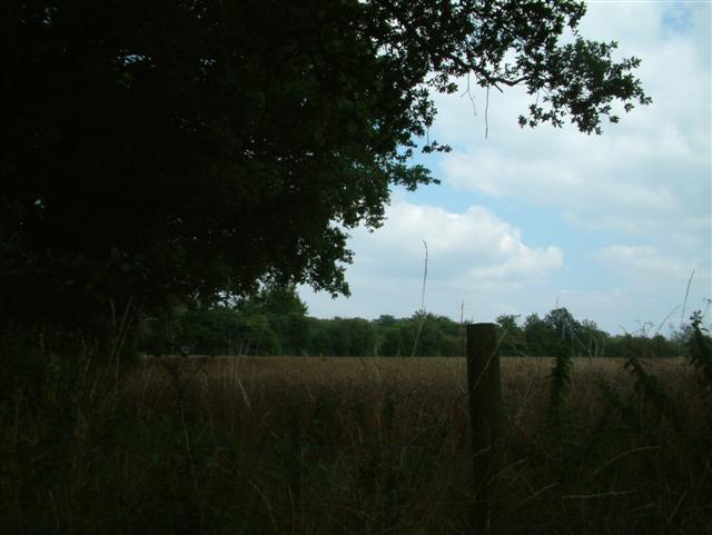 Looking towards Bishops Wood