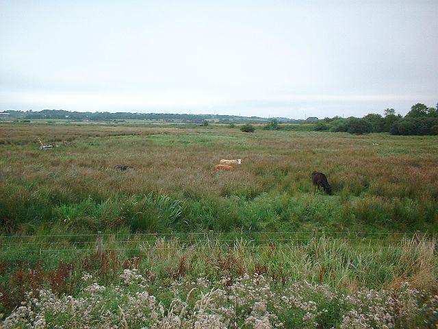 Bovine Hide and Seek