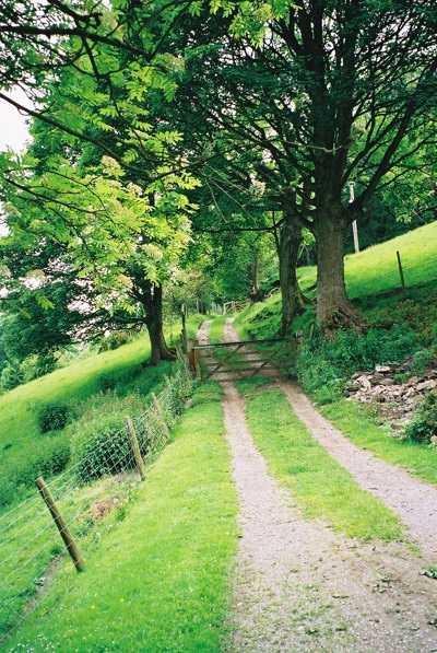 Farm Track - Moelfre