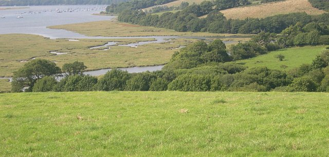 Salt Marsh near Liphill Quay