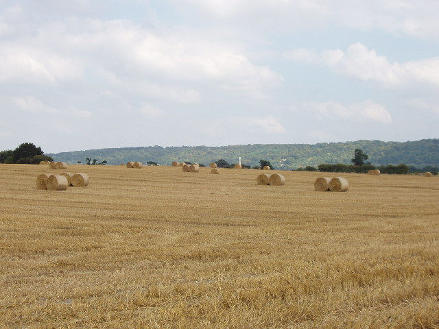 Kingston Stert - harvested cornfield