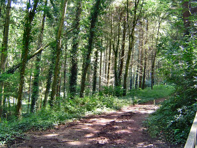 Woodland near Berry Pomeroy