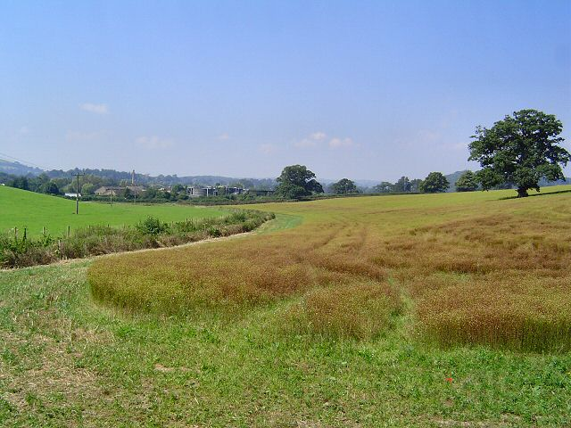 View towards Totnes from Bourton