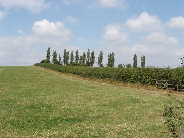 Pasture and trees near Tetsworth