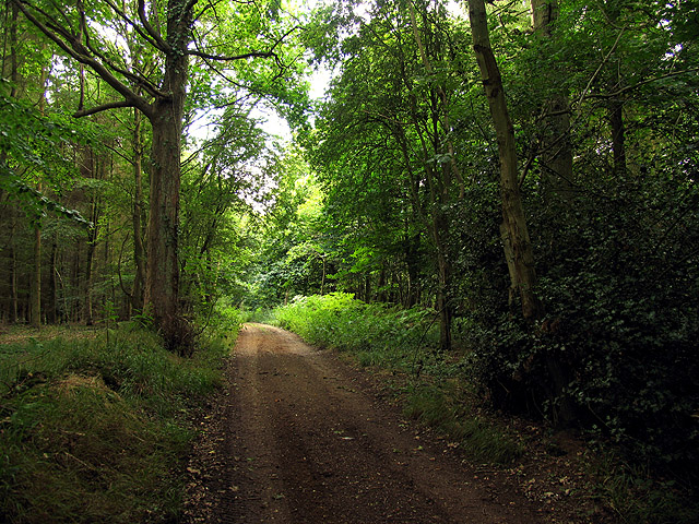 Bussock Wood near Winterbourne
