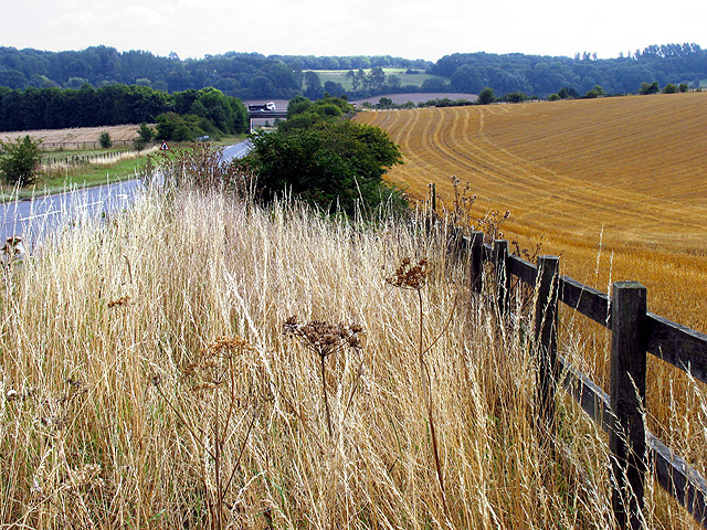 Verge and Farmland near North Heath