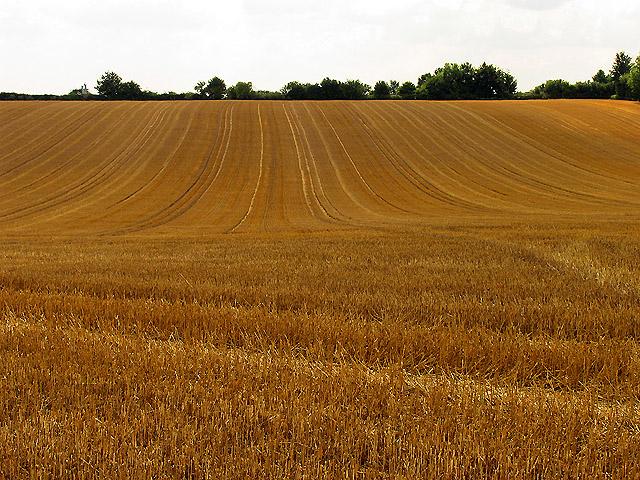 Farmland near Chieveley