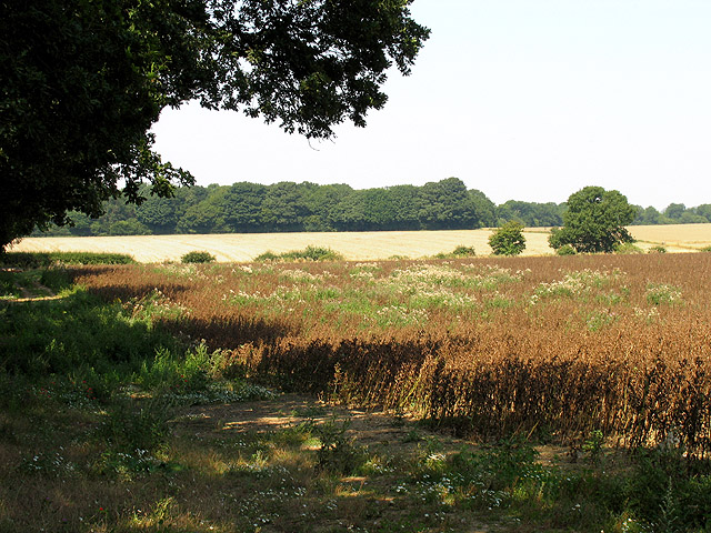 Farmland at Beedon Common