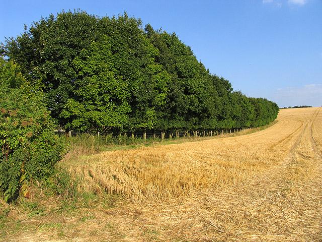 Farmland near Catmore Farm