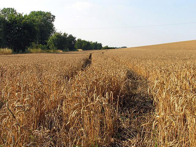 Farmland near Hillgreen