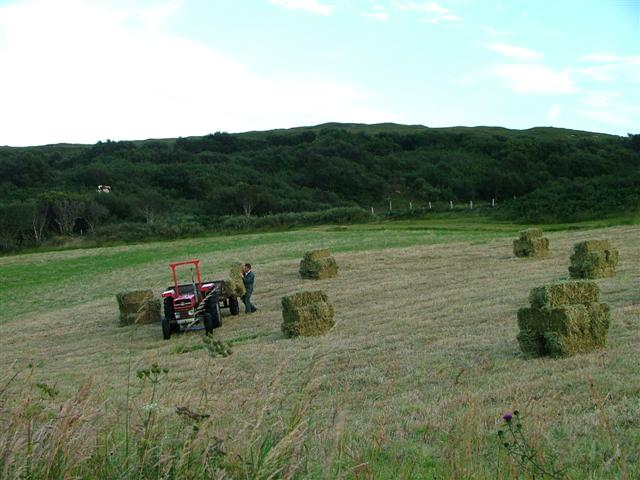 Collecting in the Bales