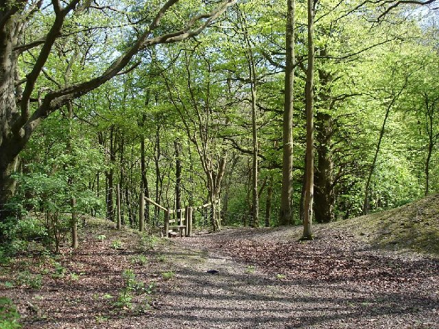 Woodland on the north side of Wolstonbury Hill