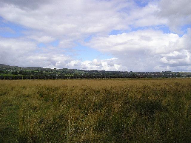 Woodside Meadows