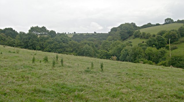 Valley at Down Wood