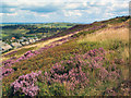 SE0634 : Denholme Edge by David Spencer