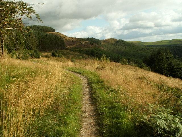 Footpath and forestry, Llechwedd gwinau