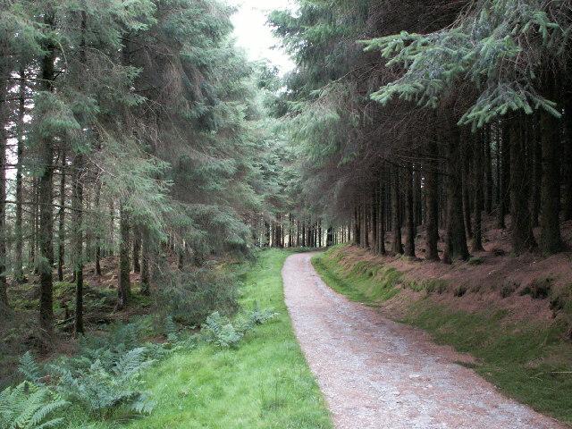 Forestry track, Llechwedd Gwinau