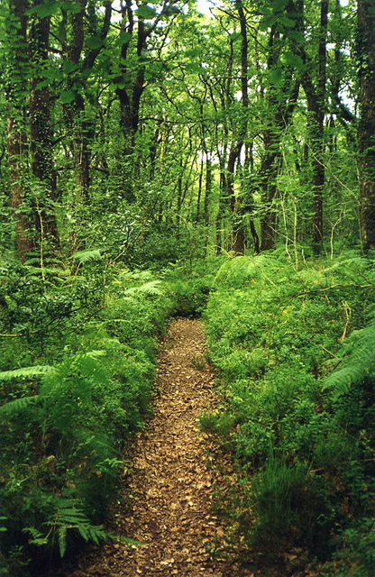 Bovey Tracey: course of leat in Yarner Wood