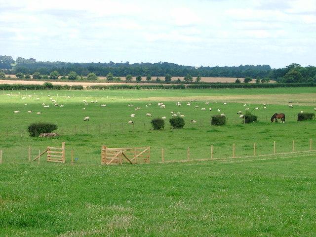 Pasture Land, Low Farm