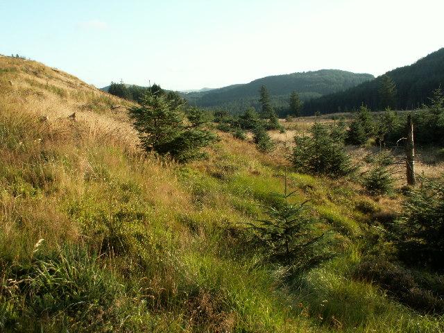 Cleared forestry, Banc yr Wyn