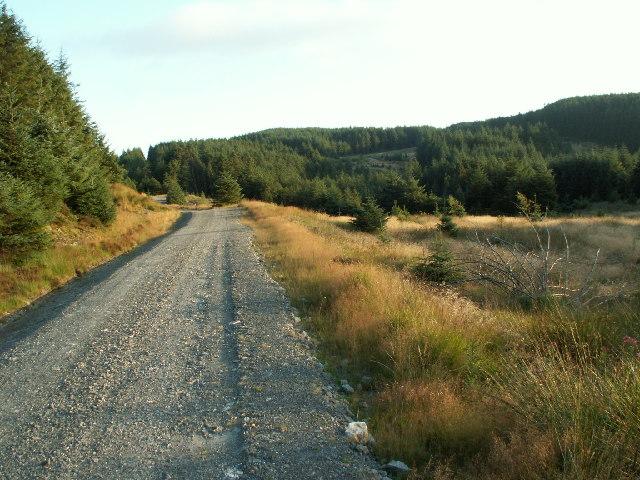 Forestry track, Fynach Fawr