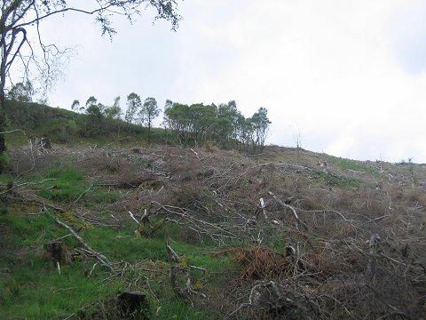 Clear fell, Loch Avich