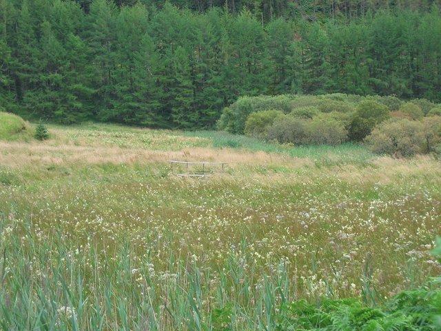 Marshland, Loch Avich