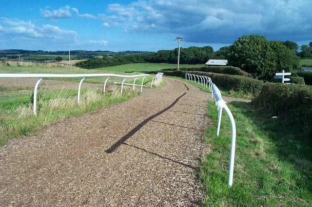 Horse gallops near Staverton