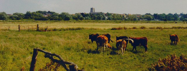 Gillingham Marshes, Near Beccles