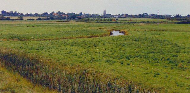 Robinsons Marshes, Walberswick, Suffolk
