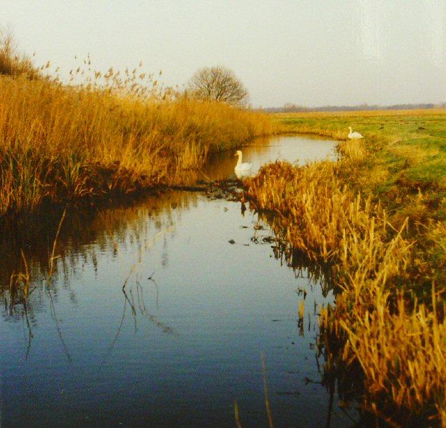Share Marsh, Near Oulton Broad