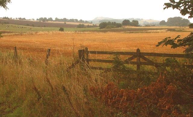 Gate to fields beside Cockairnie