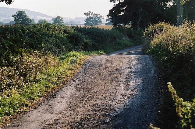 Halberton: lane near Leonard Farm
