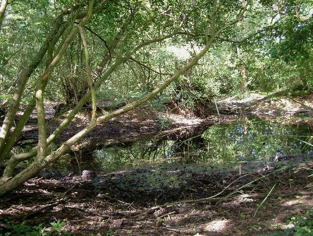Clay Scrape in Belhus Woods