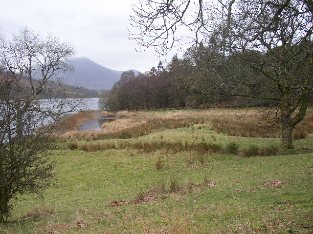 Boggy field and Holme Wood, Loweswater