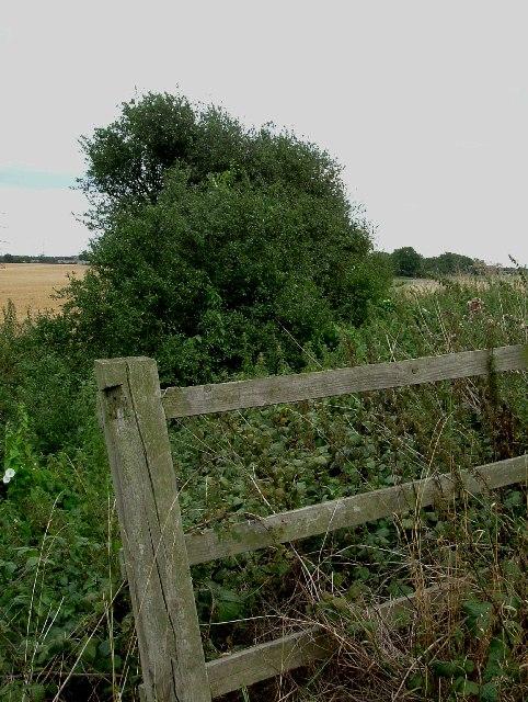 Boundary Ditch