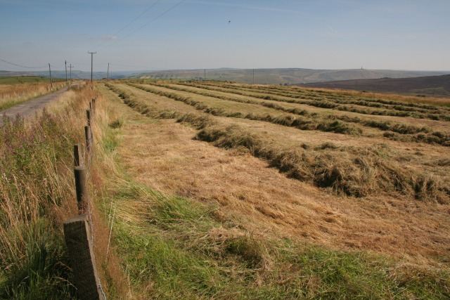Drying Grass For Hay, Burnt Edge Lane